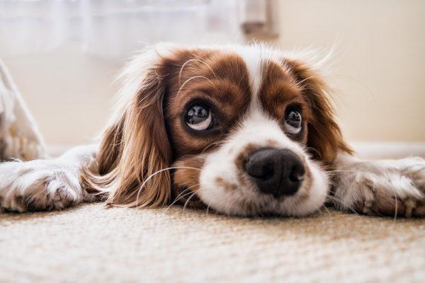 Les troubles neurologiques chez le chien