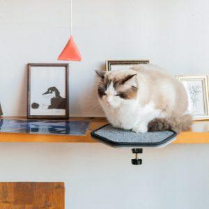 Support amovible pour chat - Mon Chien Mon Chat